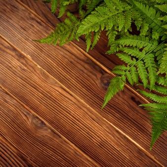 Zielona paproć opuszcza na brown dębowego drewna tle z kopii przestrzenią