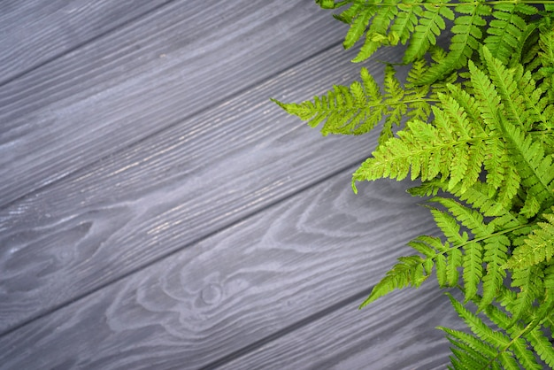 Zielona paproć opuszcza na szarym dębowego drewna tle z kopii przestrzenią