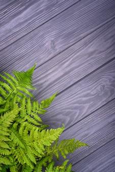 Zielona paproć opuszcza na szarym drewnianym tle z kopii przestrzenią