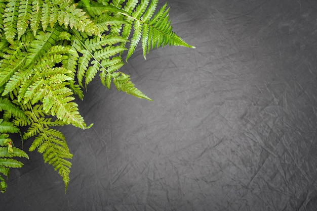 Zielona paproć opuszcza na szarym tle z kopii przestrzenią