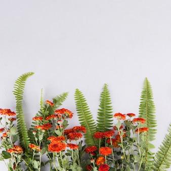 Zielona paproć opuszcza z kwiatami na stole