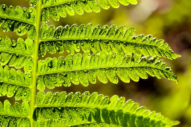 Zielona paproć