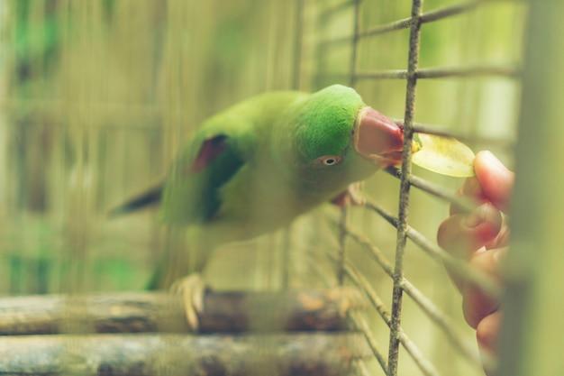 Zielona papuga w klatce