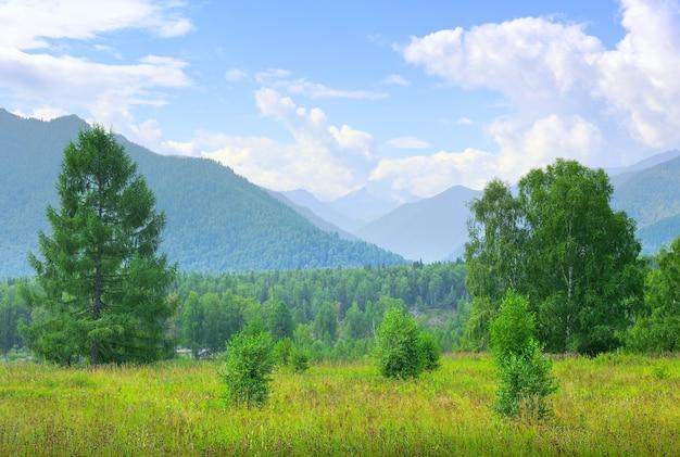 Zielona polana na tle drzew i wysokich gór w mgle pod błękitnym pochmurnym niebem. syberia, rosja