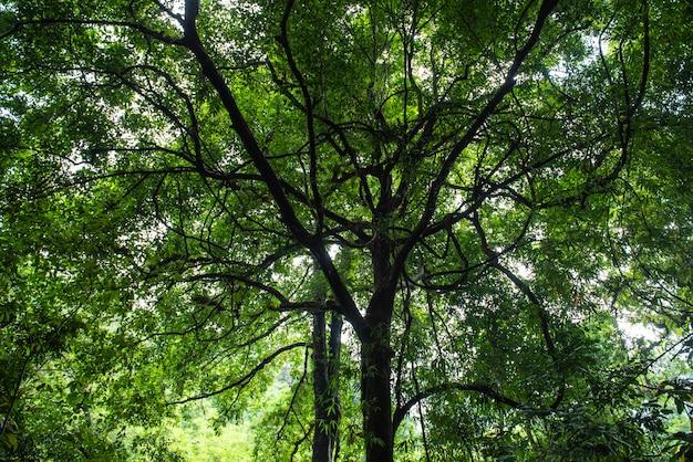 Zielona przyroda. naturalny las świerkowych drzew, promienie słońca przez mgłę tworzą mistyczną atmosferę w parku narodowym.