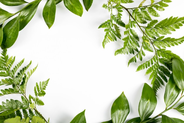 Zielona rama z gałąź i liśćmi na białym tle. leżał z płaskim, widok z góry, miejsce.