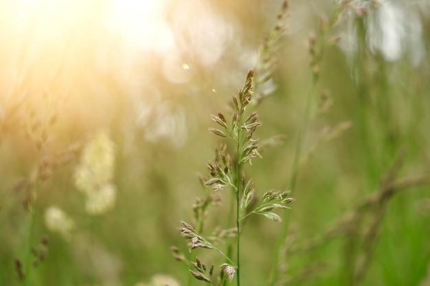 Zielona roślina kwiatowa w lecie w naturze, rośliny w ogrodzie