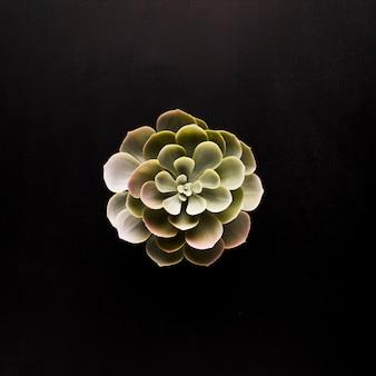 Zielona roślina na czarnym tle