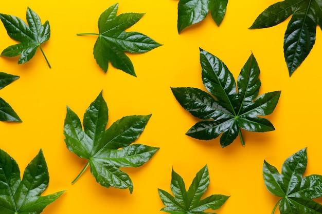 Zielona roślina pozostawia na żółtym stylu retro vintage.