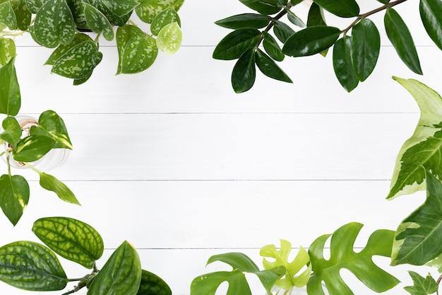 Zielona roślina pozostawia tło ramki