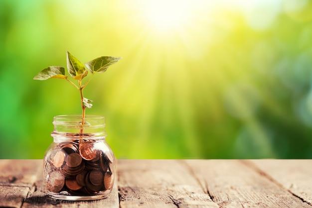 Zielona roślina rosnąca w słoiku z oszczędnościami monety. koncepcja inwestycji i odsetek