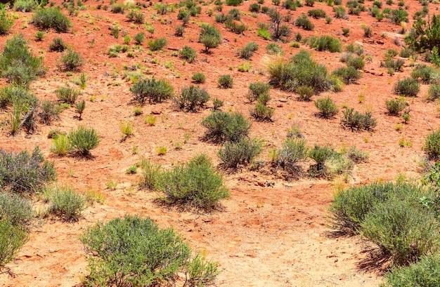 Zielona roślina rośnie przez martwą glebę.