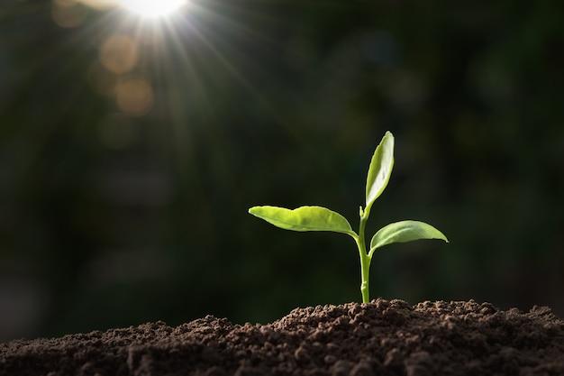 Zielona roślina rośnie w przyrodzie z promieni słonecznych