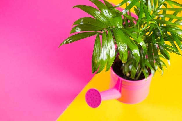 Zielona roślina w doniczce podlewania