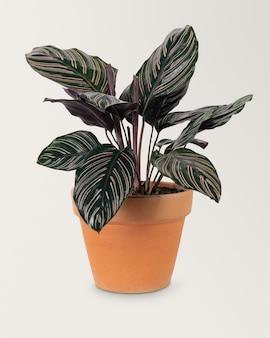 Zielona roślina w doniczce z terakoty