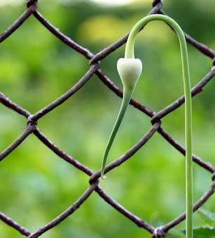 Zielona roślina w pobliżu ogrodzenia ogniwa łańcucha