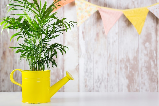 Zielona roślina w podlewanie garnku przeciw ścianie