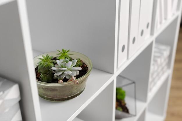 Zielona roślina w wazonie urządzona dla pokoju