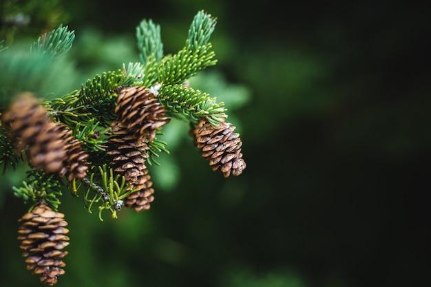 Zielona roślina z bliska brązowe nasiona