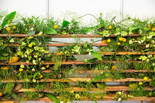 Zielona roślina z żółtymi kwiatami otaczającymi płot
