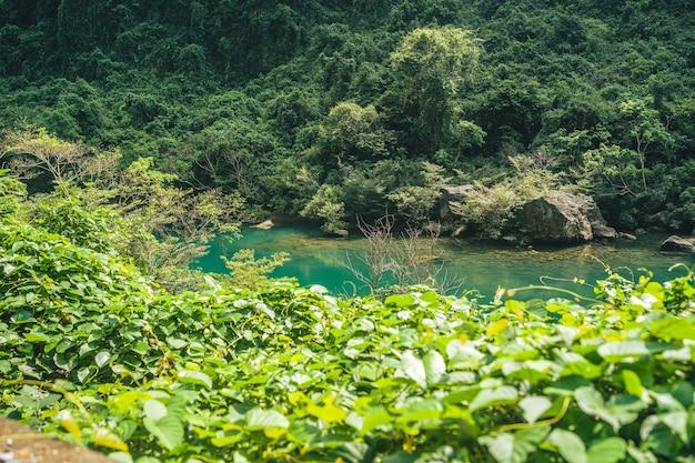 Zielona rzeka w środku lasu