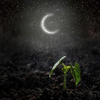 Zielona sadzonka rosnąca na księżycu i gwiazdach. elementy tego obrazu dostarczone przez nasa