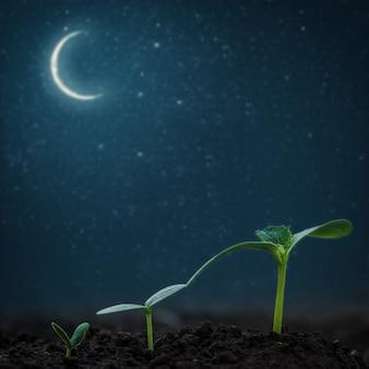 Zielona sadzonka rosnąca na powierzchni księżyca i gwiazd. elementy tego obrazu dostarczone przez nasa