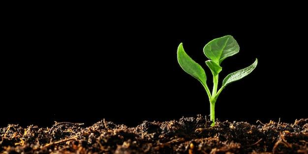 Zielona sadzonka rosnąca na ziemi podczas deszczu
