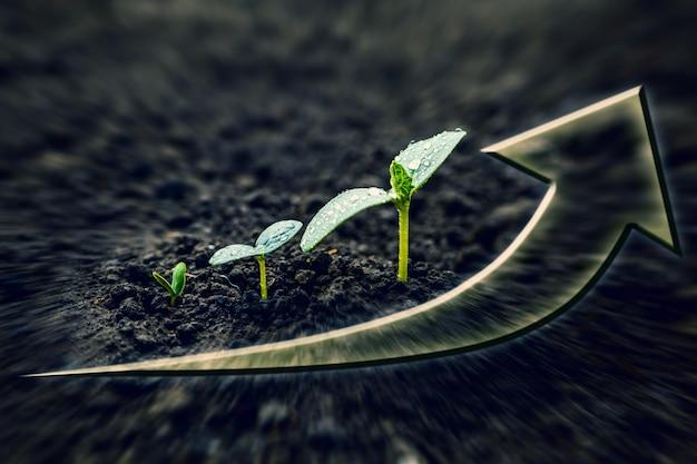 Zielona sadzonka rosnąca na ziemi w deszczu. dla biznesu
