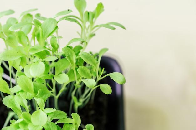 Zielona sadzonka wyrastająca z ziemi