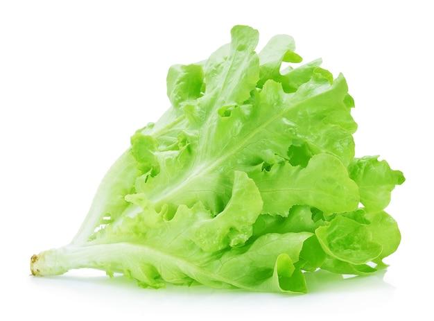 Zielona sałata dębowa na białym tle