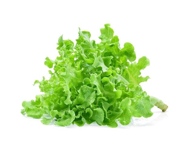 Zielona sałata dębowa z kropli wody na białym tle.