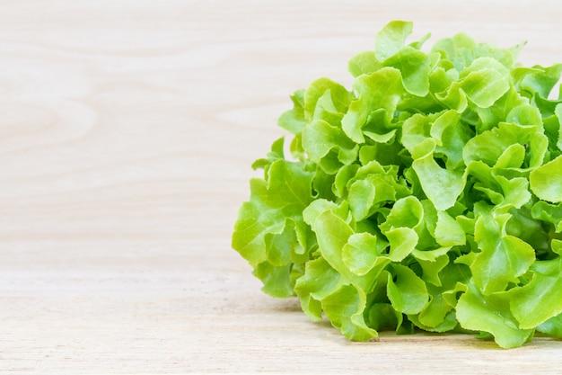 Zielona sałata dębowa