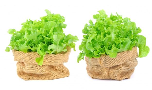 Zielona sałata na białym tle