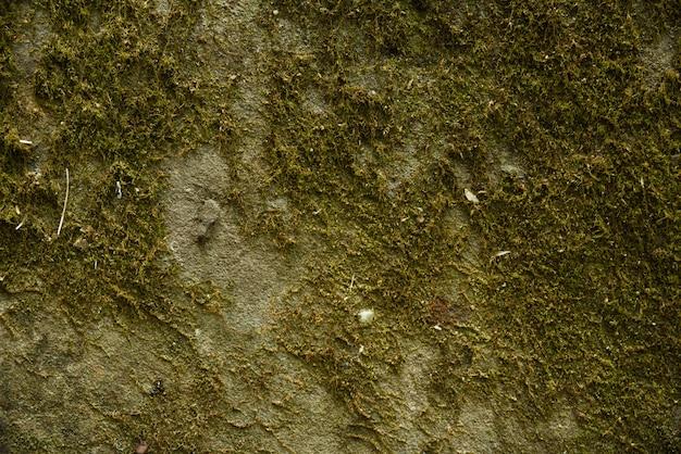 Zielona ściana mchu