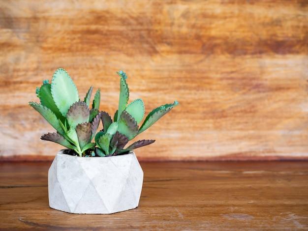 Zielona soczysta roślina, kalanchoe hybrid w geometrycznej betonowej doniczce na drewnianej powierzchni z kopią przestrzeni.