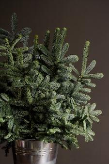 Zielona świeża jodła lub abies nobilis rozgałęziają się w żelaznym wiadrze na ciemnym tle, pojęciach bożego narodzenia lub nowego roku
