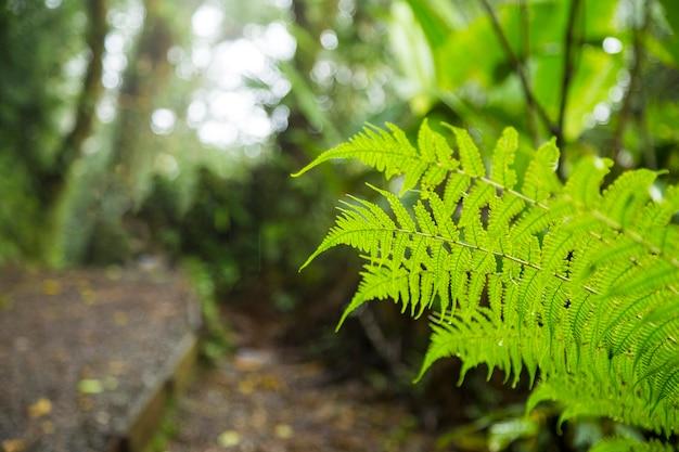 Zielona świeża paproci gałąź w tropikalnym lesie deszczowym