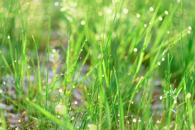 Zielona świeża trawy rosa opuszcza fotografię dla abstrakcjonistycznego tła