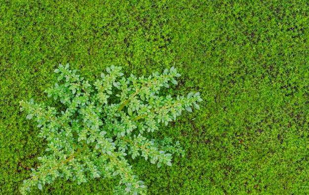 Zielona tekstura dla tło