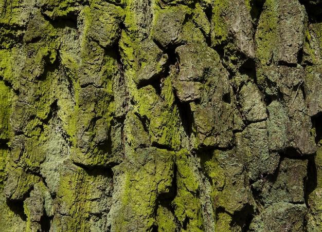 Zielona tekstura drewna