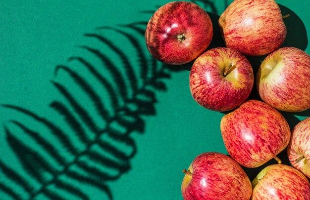 Zielona tekstura z tropikalnym odcieniem i jabłkami. ściana liść roślina cień tło lato tropikalna plaża podróż z minimalną koncepcją płaska natura palmy