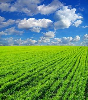 Zielona trawa błękitne niebo i białe chmury