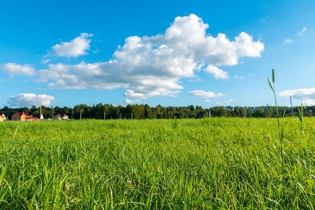 Zielona trawa i białe chmury