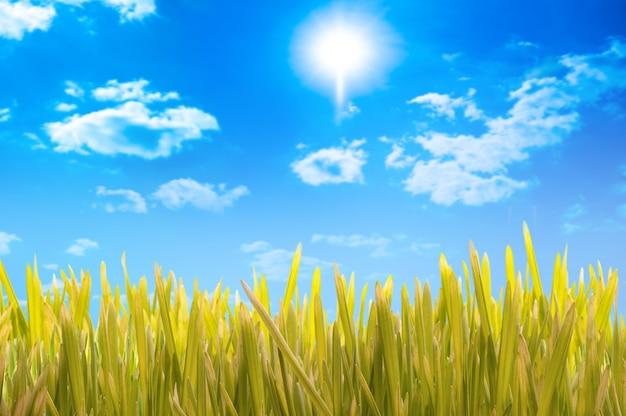 Zielona trawa i błękitne niebo z chmurami
