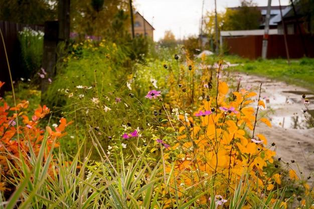 Zielona trawa i kwiaty wczesną jesienią.