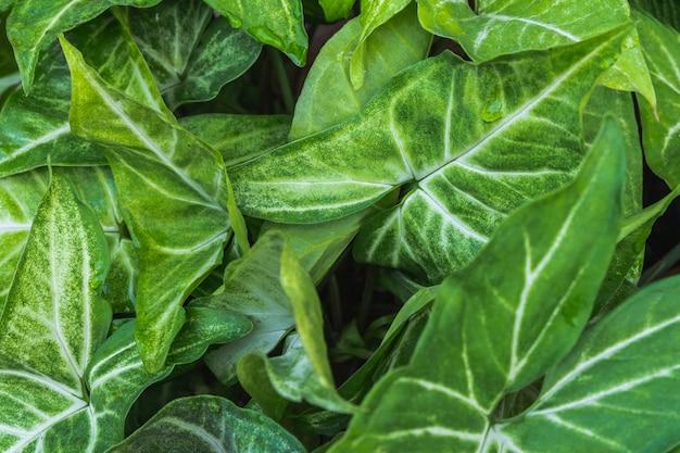 Zielona trawa i zielone liście w tle