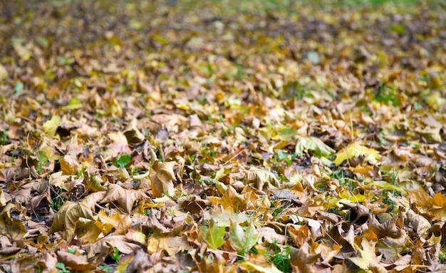 Zielona trawa jesień tło z odciętymi liśćmi