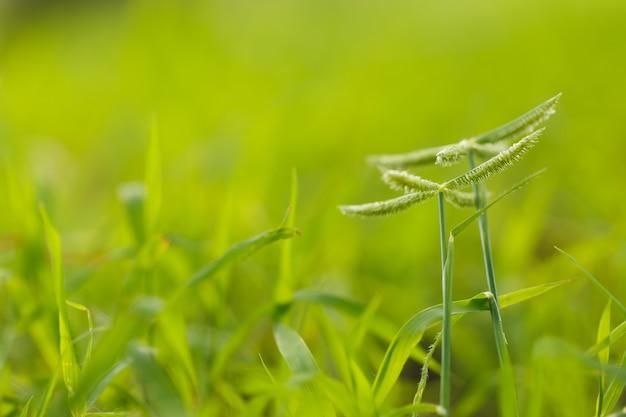 Zielona trawa kwiat natura tło
