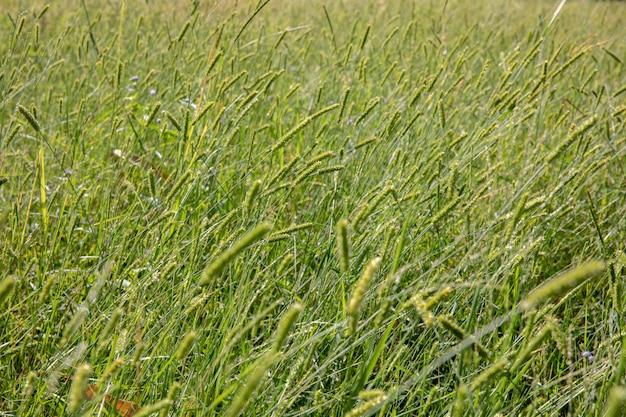 Zielona Trawa Kwiat Pole Premium Zdjęcia
